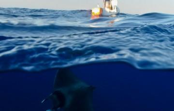 L'atlantique en paddle, le défi de Nicolas Jarossay