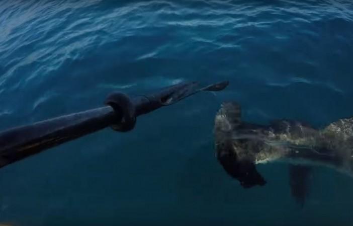 mac-macCracken-kayak-shark